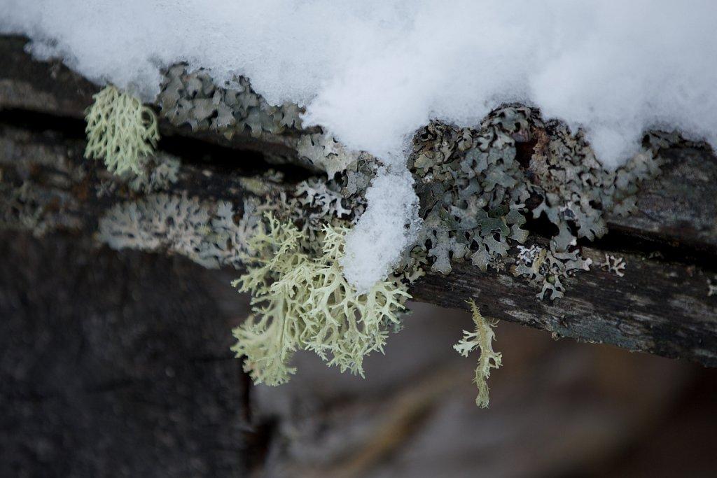 Lesachtal im Winter - Österreich
